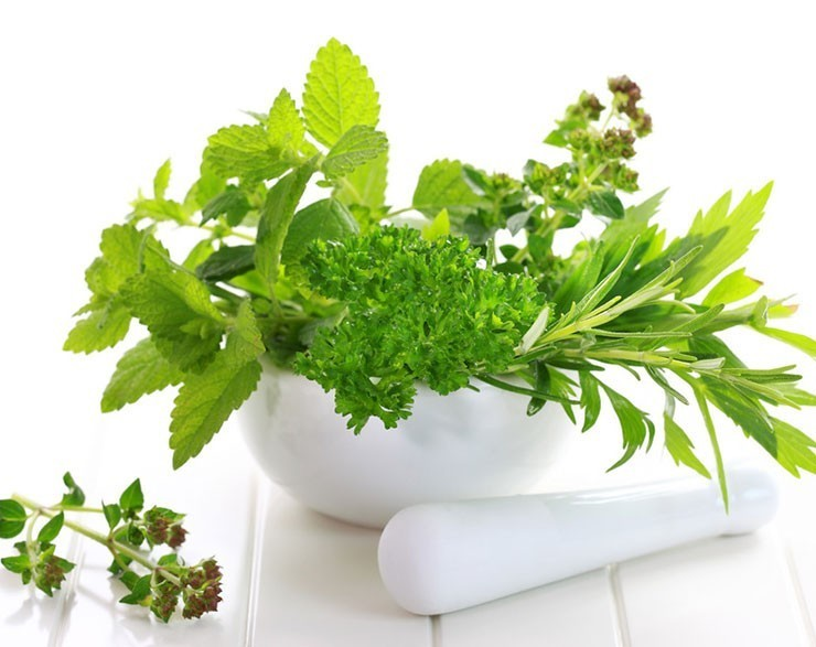 Herbs and Botanicals