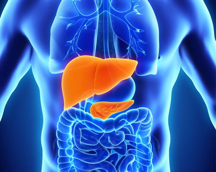 Liver and Gallbladder Support