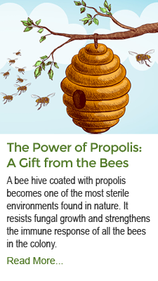 The Power of Propolis: A Gift from the Bees